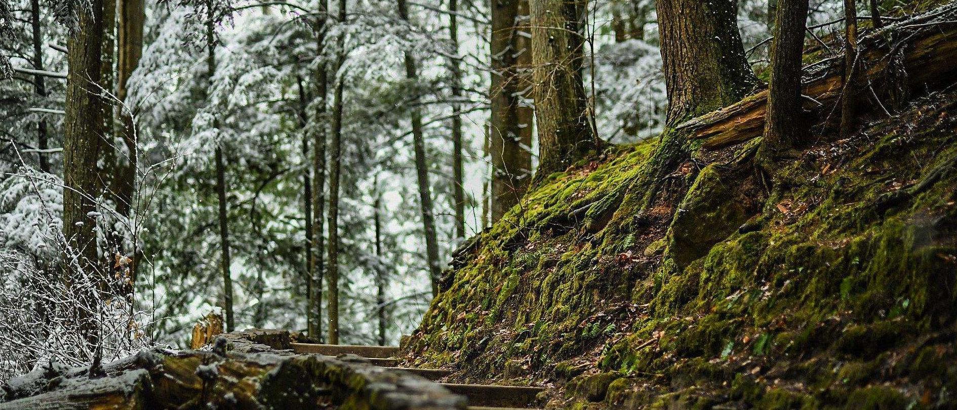 Hocking Hills Winters Trails
